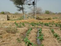 Des plants arros s devant la pompe electrique